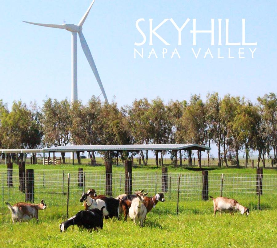 Goats_farm